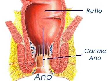 Il canale anale: come è fatto, anatomia ed emorroidi